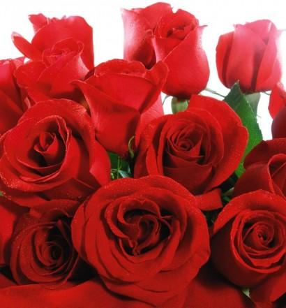 love-rose-flower-2560x1600